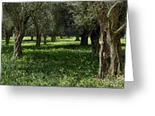 Olive Grove Color Italy Greeting Card