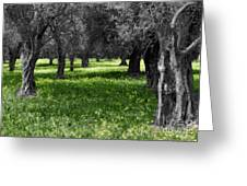 Olive Grove Italy Cbw Greeting Card