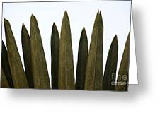 Olive Palm Greeting Card