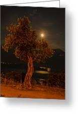 Olive Tree Under Moonlight Greeting Card by Jeffrey Teeselink