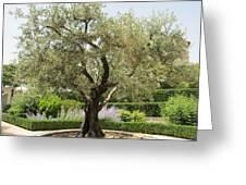 Olive Tree Greeting Card