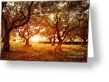 Olive Trees Garden Greeting Card