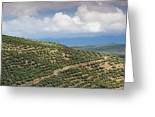 Olive Trees In A Field, Ubeda, Jaen Greeting Card