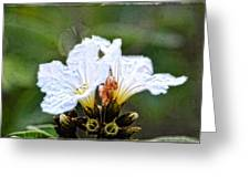 Olive You - Olive Flower Art By Sharon Cummings Greeting Card
