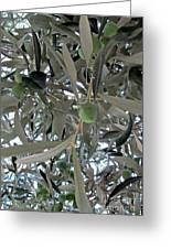 Olives Of The Mediterrenean Greeting Card