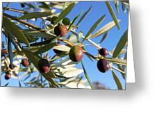 Olives (olea Europaea) On A Tree Greeting Card