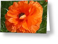 Olympia Orange Poppy Greeting Card