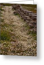 Olympia Ruins And Wild Flowers   #9679 Greeting Card