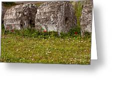 Olympia Ruins And Wild Flowers   #9821 Greeting Card