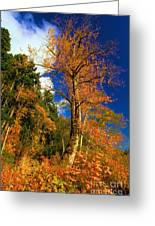Olympic Fall Greeting Card