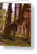 Olympic National Park - Rainforest Greeting Card