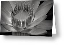 Om Mani Padme Hum Hail To The Jewel In The Lotus Greeting Card