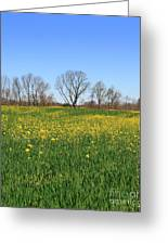 On Golden Field Greeting Card