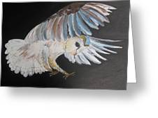 On Silent Wings Greeting Card