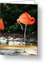 On Stilts Greeting Card
