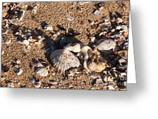 On The Beach 03 Greeting Card