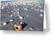 On The Beach Apple Murex Greeting Card