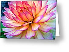 On The Dahlia Side Greeting Card