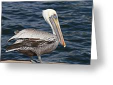 On The Edge - Brown Pelican Greeting Card