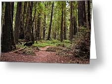 On The Enchanted Path Greeting Card