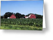 On The Farm In Belle Plaine Greeting Card