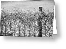 On The Fence Bw Greeting Card