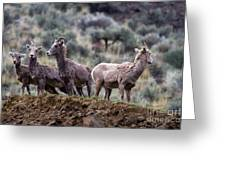On The Ledge Greeting Card by Mike  Dawson