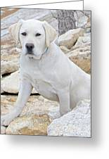 On The Lookout Greeting Card by Suzanne Oesterling