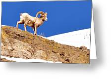 On The Mountain Greeting Card