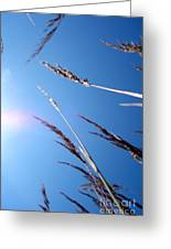 On The Prairie #12 Greeting Card