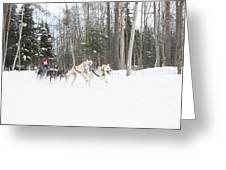 On The Race Trail Greeting Card by Tim Grams
