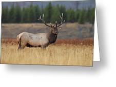 On The Range Greeting Card by Daniel Behm