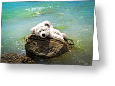 On The Rocks - Teddy Bear Art By William Patrick And Sharon Cummings Greeting Card