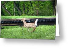 On The Run Greeting Card