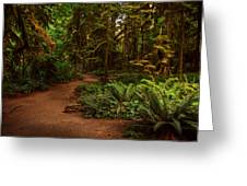 On The Trail To .... Greeting Card by Randy Hall