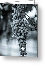 On The Vine  Bw Greeting Card