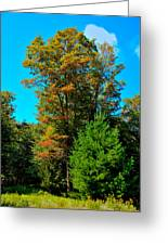 On Top Of Maple Ridge - Old Forge New York Greeting Card by David Patterson