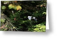 On Winged Flight Greeting Card