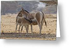 Onager Equus Hemionus 2 Greeting Card