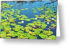 Once Upon A Lily Pad Greeting Card