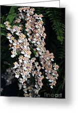 Oncidium Twinkle Fragrance Fantasy Greeting Card