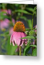 One Among The Coneflowers Greeting Card