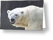One Angry Polar Bear Greeting Card