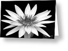 One Black And White Water Lily Greeting Card