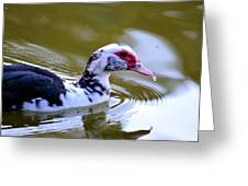 One Drop's Reflection Of The Muscovy Greeting Card