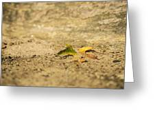 One Fallen Greeting Card