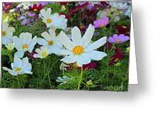One Flower Stands Out Greeting Card