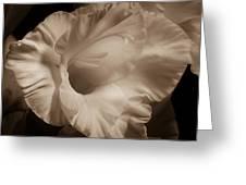One Gladiola Greeting Card