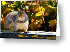 One Gray Squirrel Greeting Card