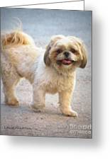 One Happy Little Dog Greeting Card